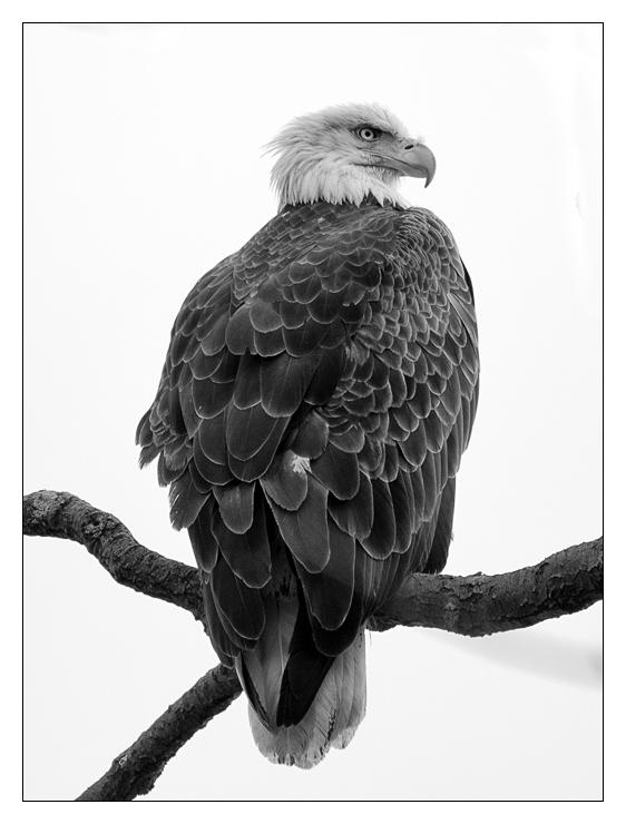 eagle_wordpress