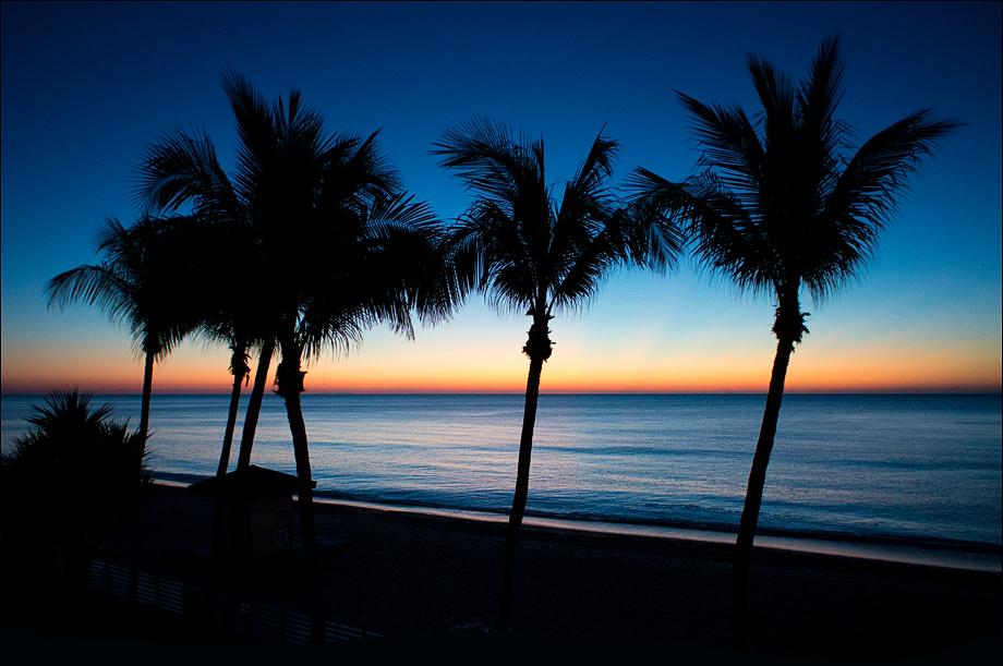 PalmTrees_wordpress