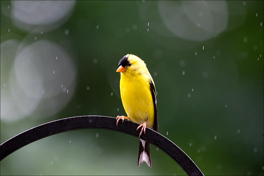 RainyDayBird_wordpress