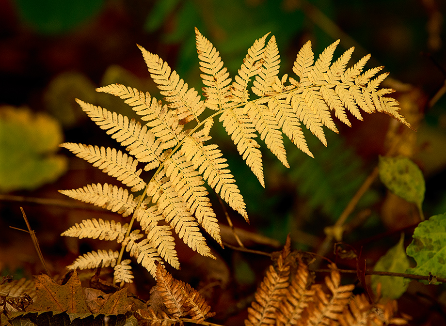 fern_wordpress