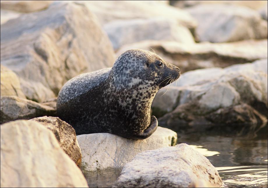 Seal_wordpress