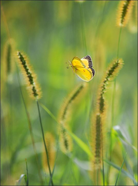 butterfly_wordpress