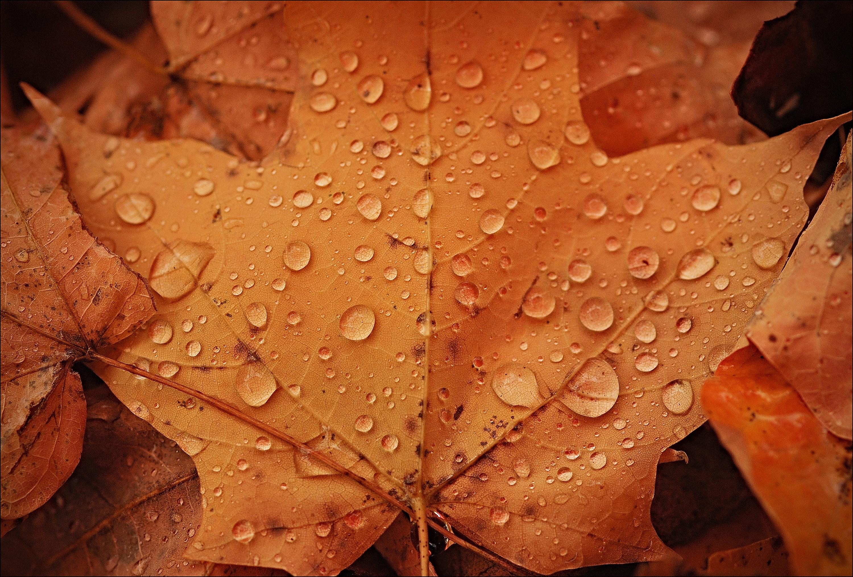 rainleaf_sh