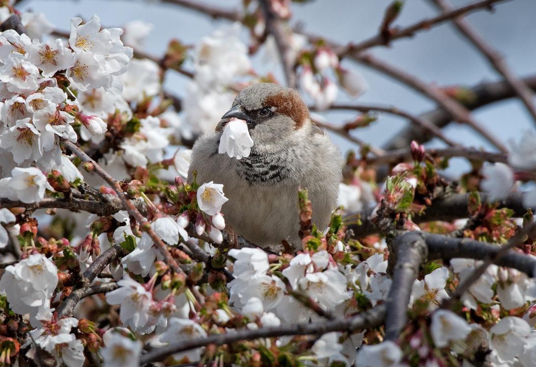 BlossomBird_wordpress